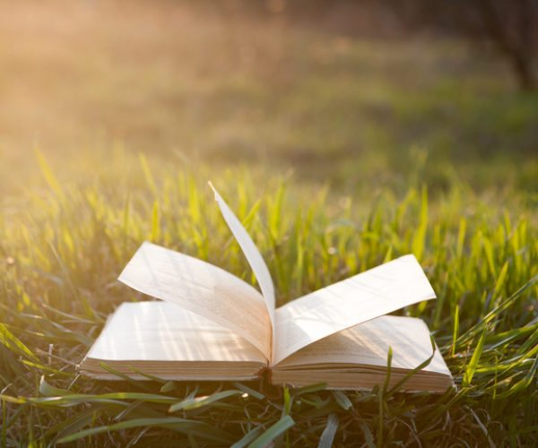 Open book on grass under the sun
